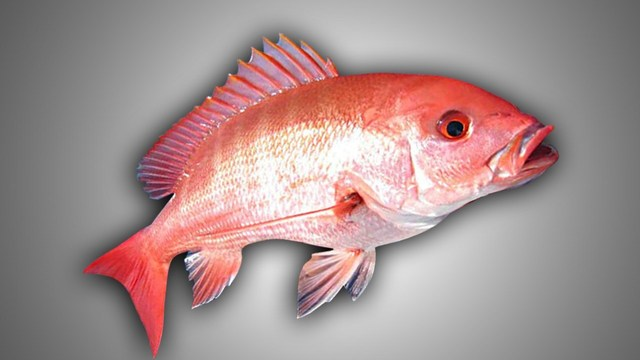 Red Snapper Season Dates Announced