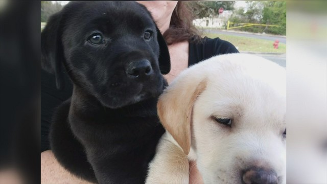 Dog Owner Files Lawsuit Against Lucky Puppy Rescue