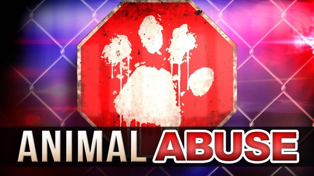 BCSO: Teen Slit Dog's Throat and Burned Carcass